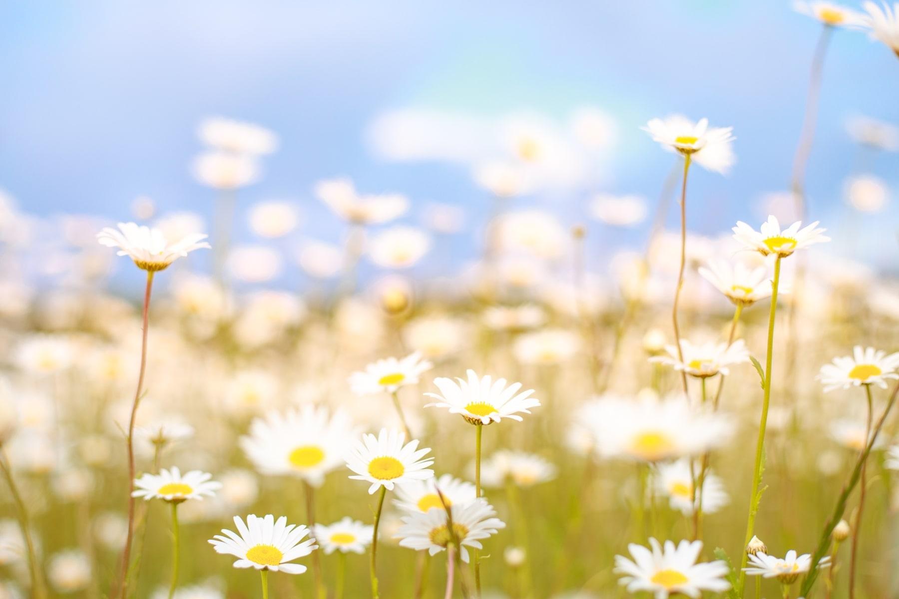Inspiriši se proljećem!
