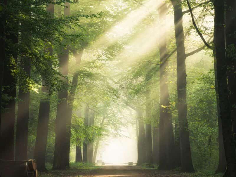 Islamski sanovnik   Snovi na slovo N Značenje snova u islamu Islamski sanovnik Sanovik na slovo N Najtačnije tumačenje snova Sanjati na slovo N Značenje snova