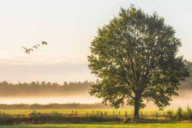 Kako vjernik može dobiti više stabala u Džennetu? Džennet i Džehennem Omer Sulejman el-Eškar Islamske knjige BiH Islamski tekstovi islamska knjižara knjige online prodaja El Kelimeh